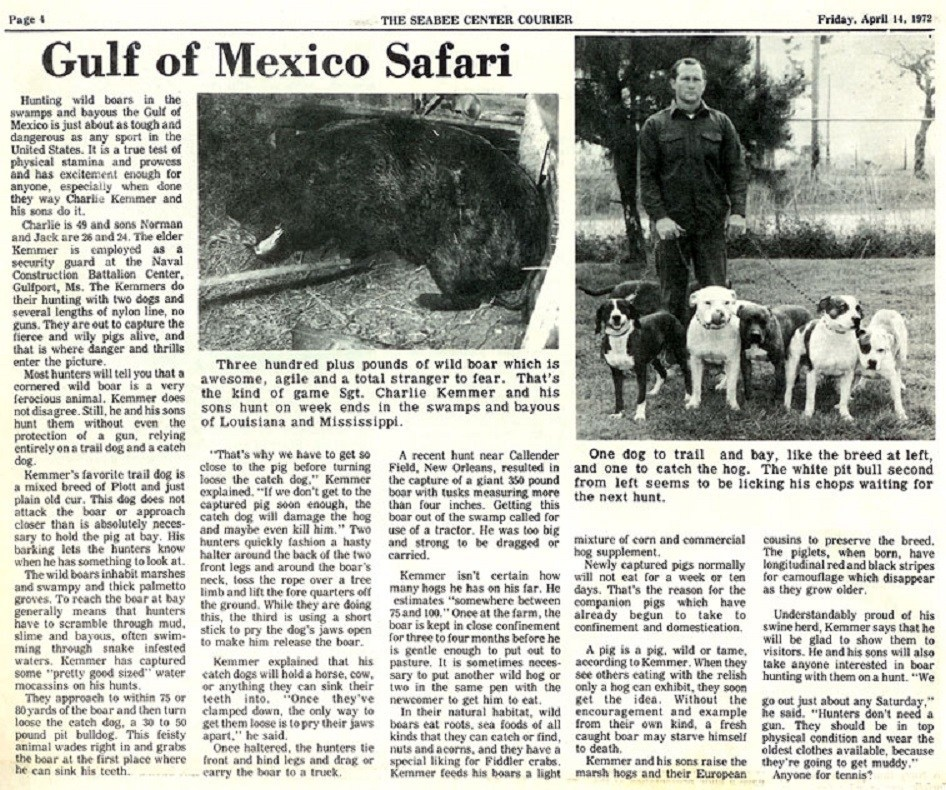 boar hunting safari newspaper article