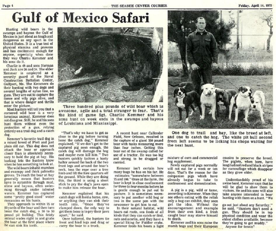 boar hunting safari newspaper article